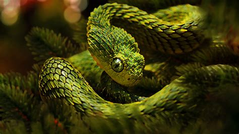 green unusual snakes cactus camouflage hd wallpaper