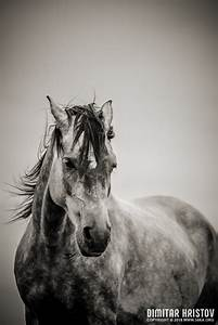 The Lonely Horse Portrait In Black And White