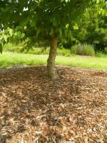 Mulch around Trees and Shrubs