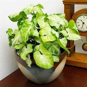 Plante Verte D Appartement : savourez la beaut de la plante d int rieur dans notre ~ Premium-room.com Idées de Décoration