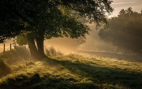 nature landscape mist sunrise trees grass shrubs