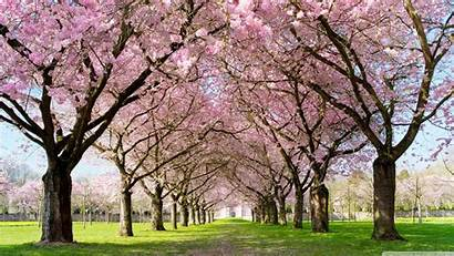 Season Spring Wallpapers Park Pathway Backgrounds Freecreatives