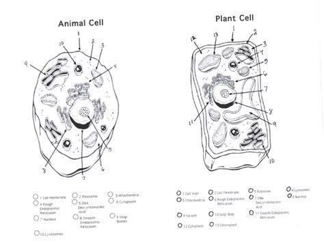plant  animal cells diagram quiz biological science