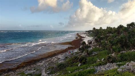 Preocupante recale de sargazo en playas de Tulum