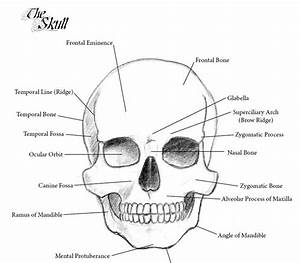 Sonjebasaland  Anatomy