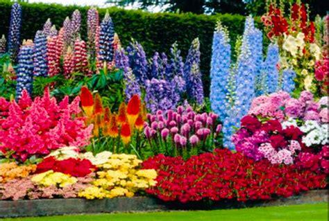perennial flower plants   garden perenni