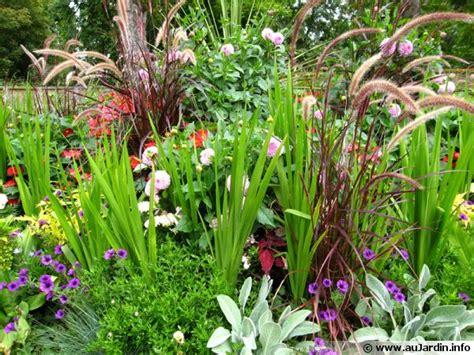 cuisiner les brocolis massifs et pelouse