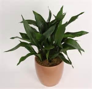 Low Light Indoor Plants That Need