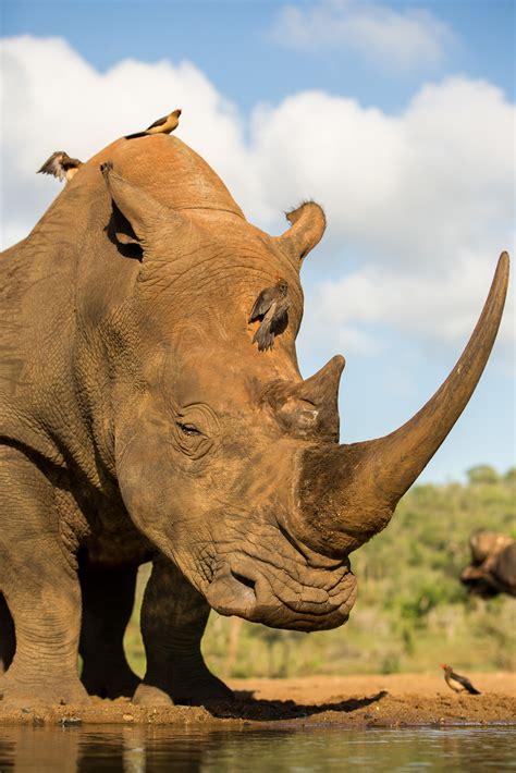 wildlife conservation  anti trafficking act
