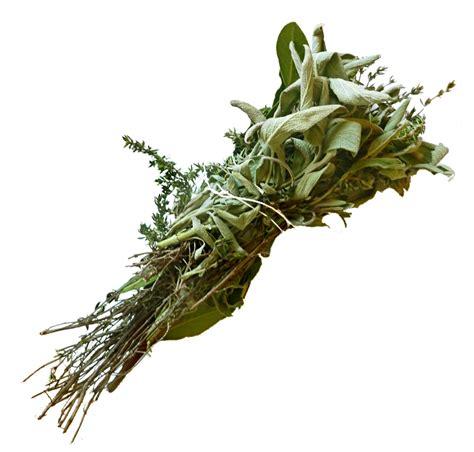 sauge cuisine recettes bouquet garni wikipédia