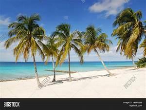 Tropical Beach White Sand, Palm