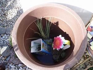 Miniteich Pflanzen Set : seerosen pflanzen im k bel das portal der seerose seerosen im k bel welche sorten und gef e ~ Buech-reservation.com Haus und Dekorationen