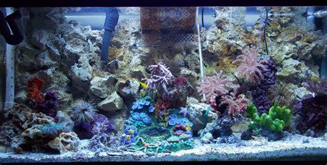 My Seahorse Tank Update