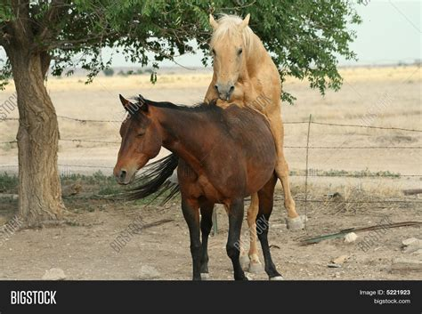 horses mating www pixshark com images galleries with a
