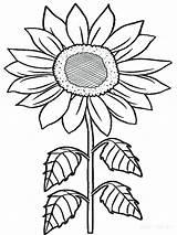 Sunflower Coloring Pages Sunflowers Printable Flowers Adults Rainforest Flower Van Print Drawing Tropical Sheet Colorings Getcolorings Gogh Getdrawings Clipartmag Kid sketch template