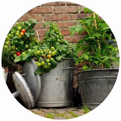 Container Garden Gardening Consider Designing Kidsgardening Resource