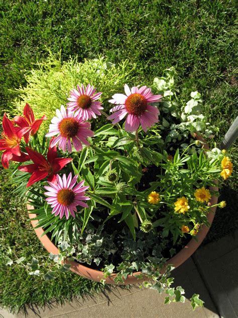 Dr Dans Garden Tips Perennials In A Pot