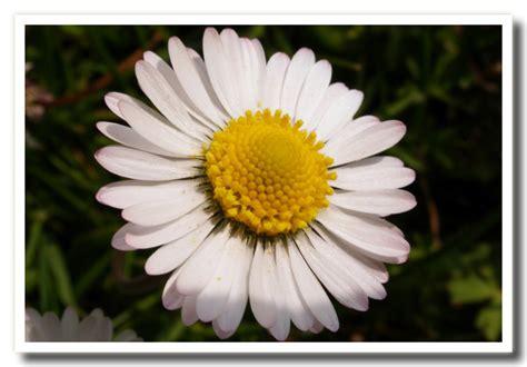 fiori di fiori di primavera