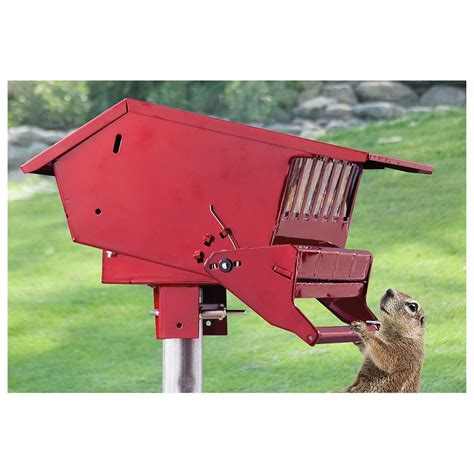 red squirrel proof feeder 581912 bird houses feeders