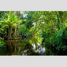 Amazon Rainforest Packing List And Essential Information