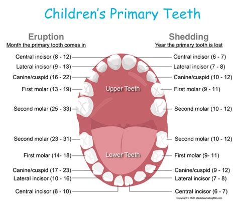 Stages Of Teething And Helpful Hints Kids Dental Online