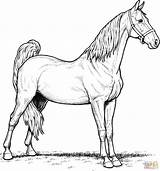 Coloring Horse Miniature Printable Mare sketch template