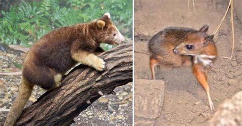 animales en peligro de extincion  quizas  vuelvas
