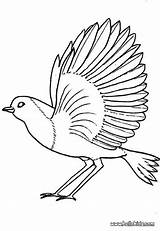 Robin Coloring Bird Pages Printable Feather Birds Colouring Sheets Drawing Draw Fly Hellokids Robins African Sheet Animal Flying Adult Getcolorings sketch template