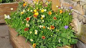 Comment Remplir Une Grande Jardinière : que planter dans ses jardini res d t ~ Melissatoandfro.com Idées de Décoration