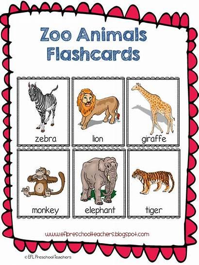 Zoo Preschool Animal Kindergarten Flashcards Theme Esl
