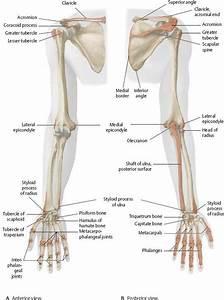 93 Best Anatomy