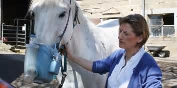 husten pferd homoeopathie gudrun hoegele pferd hustet
