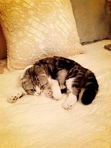 Her cat- Meredith - Taylor Swift Photo (35552395) - Fanpop