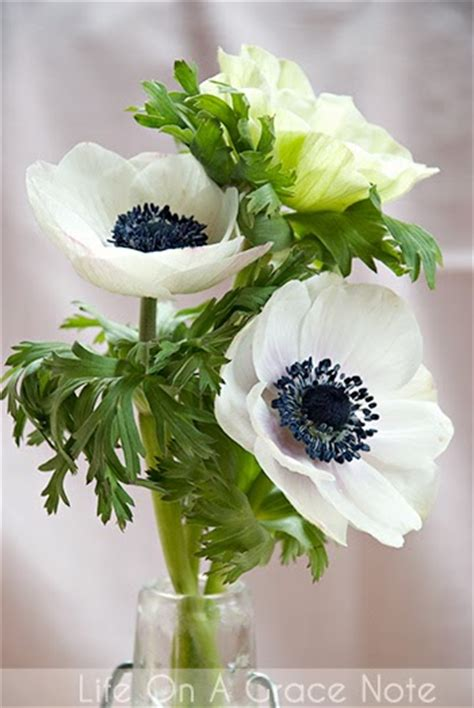 bleu bird design white anemones   flower