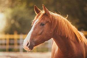 how to choose horse insurance equine therapy horse therapy for addiction treatment