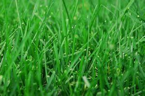 Traitement Mauvaise Herbe : traitement mauvaise herbes gazon ~ Melissatoandfro.com Idées de Décoration