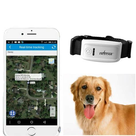 gps tracker testsieger gps sender tracker f 252 r hunde im vergleich testsieger