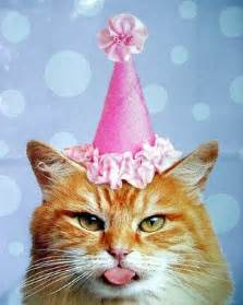 cat birthday cat birthday quotes quotesgram