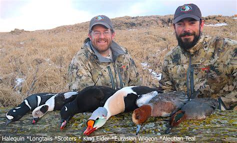 Species Aleutian Island Waterfowlers Alaksa Duck