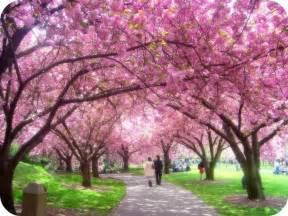 Botanical Gardens Washington Dc by Ciliegio Giapponese Significato Fiori Significato Del
