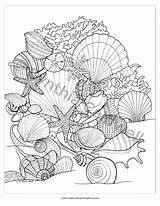 Coloring Seashells Sea Pages Adult Shells Colouring Sheets Beach Drawings Instant Mandala Printable Print Etsy Seashell Ocean Books Fish Patterns sketch template