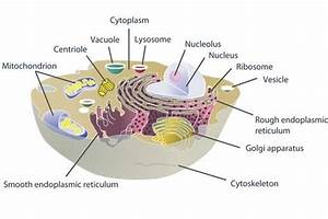 This Diagram Shows The Structures Inside A Eukaryotic Cell