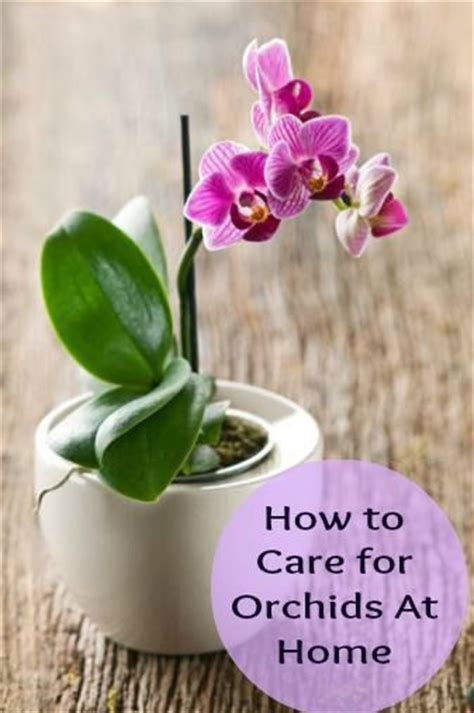 how to take care of an orchid 23 best images about garden orchids on pinterest dining room centerpiece purple orchids and