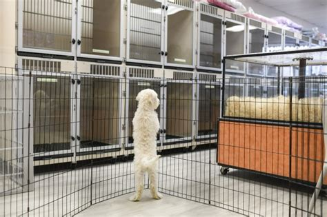 We are open to serve your pets needs. Colorado House will weigh whether to outlaw dog and cat ...