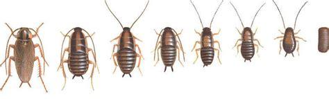como eliminar cucarachas eficazmente