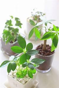 Welche Erde Für Palmen : besondere pflanzen mit wenig pflege hydrokulturpflanzen ~ Watch28wear.com Haus und Dekorationen