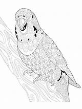 Coloring Parrot Zentangle Adults Adult Printable Mycoloring sketch template