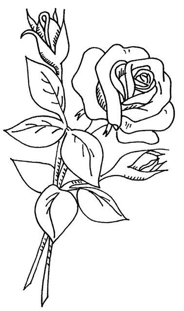 WB flowers 2 37 | Adult coloring, Rose and Flowers