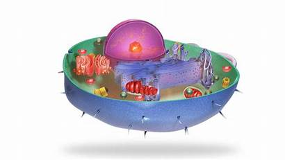 Cell Animal Apkpure