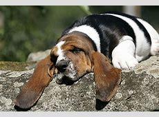 Lustige Hundebilder Fotos zum Lachen